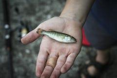 Fische in der Hand Lizenzfreie Stockfotografie