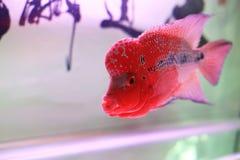 Fische in der kleinen Schüssel lizenzfreie stockfotografie