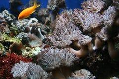 Fische in der Koralle Stockbild