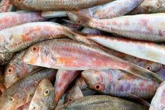 Fische der roten Meeräsche Lizenzfreie Stockfotos