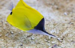 Fische der spitzen Wekzeugspritze stockbild