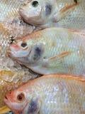 Fische des Lebensmittels stockfotos