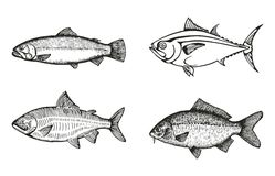 Fische des See- und des Flussesgesetzten Skizzenvektors Stock Abbildung