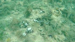 Fische, die in der Zeitlupe weiden lassen stock video