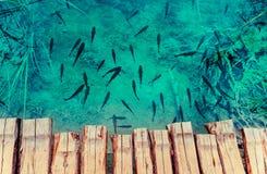 Fische, die in einem See schwimmen Lizenzfreie Stockfotos