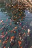 Fische, die weg schwimmen Stockfotografie