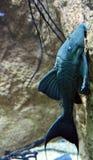 Fische, die zur Wand sich lehnen lizenzfreies stockfoto