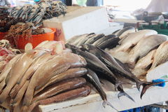 Fische am Dubai-Fischmarkt Lizenzfreie Stockbilder