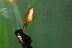 Fische in einem Aquarium Stockbild