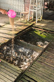 Fische in einem Bauernhof Stockfotografie