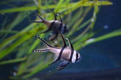 Fische in einem Behälter Lizenzfreies Stockbild