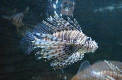 Fische in einem Behälter Stockfotos