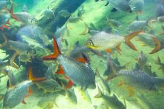 Fische in einem Florida-Aquarium stockfotos