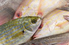 Fische an einem Markt Lizenzfreie Stockbilder