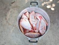 Fische in einem Potenziometer stockfoto
