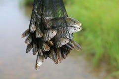 Fische in einem Rasterfeld Stockbild