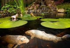 Fische in einem Teich Lizenzfreie Stockbilder