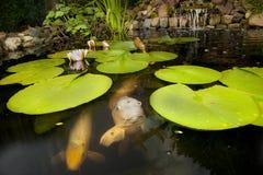 Fische in einem Teich Stockfotografie