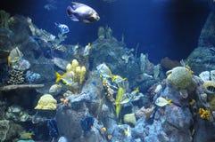 Fische in einem tropischen Acquarium Stockfotografie