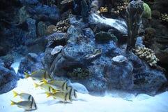 Fische in einem tropischen Acquarium Lizenzfreie Stockfotografie