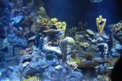 Fische in einem tropischen Acquarium Stockbilder