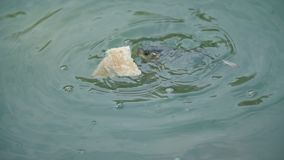 Fische essen das Brot, das in das Wasser geworfen wird stock footage