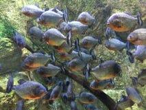 Fische für Show Stockbild