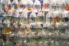 Fische für Verkauf in Hong Kong Stockbilder
