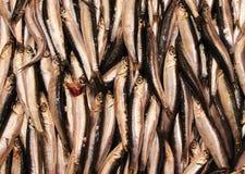 Fische für Verkauf in Hong Kong Lizenzfreie Stockbilder