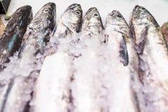 Fische für Verkauf im Fischshop lizenzfreie stockbilder