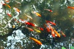 Fische flach stockfotografie
