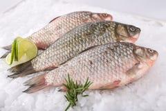 Fische frisch Lizenzfreies Stockbild