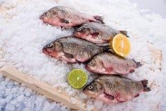 Fische frisch Stockfotografie