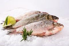 Fische frisch Stockbilder
