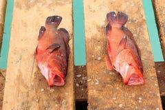 Fische frisch in Kap-Verde Stockfotos