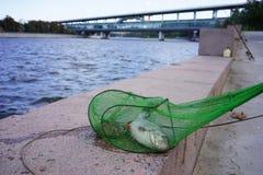 Fische, gefangen in Moskau-Fluss Lizenzfreies Stockfoto