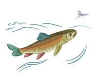 Fische gefangene Eintagsfliegen Lizenzfreies Stockfoto