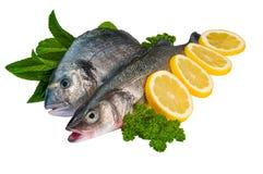 Fische gegen reinen weißen Hintergrund stockbilder
