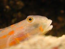 Fische gegen schwarzen Hintergrund Stockfoto