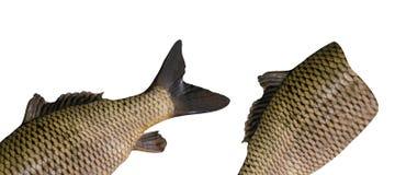 Fische getrennt auf white lizenzfreie stockfotografie
