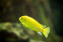 Fische im Aquarium Lizenzfreie Stockfotografie