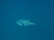 Fische im blauen Meer Lizenzfreies Stockbild
