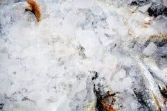 Fische im Eis Lizenzfreies Stockfoto