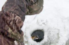 Fische im Eisloch Stockbild