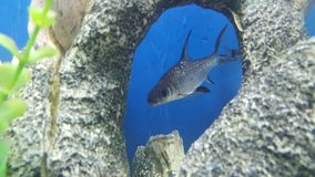 Fische im Fenster Lizenzfreie Stockfotos