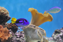 Fische im Fisch-Becken Lizenzfreies Stockbild