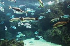 Fische im flachen Aquariumbehälter Lizenzfreie Stockfotos