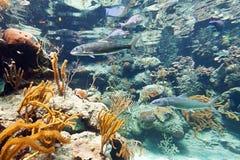 Fische im karibischen Meer Lizenzfreies Stockfoto