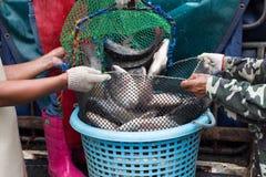 Fische im Markt Stockfoto