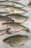Fische im Markt Lizenzfreies Stockbild